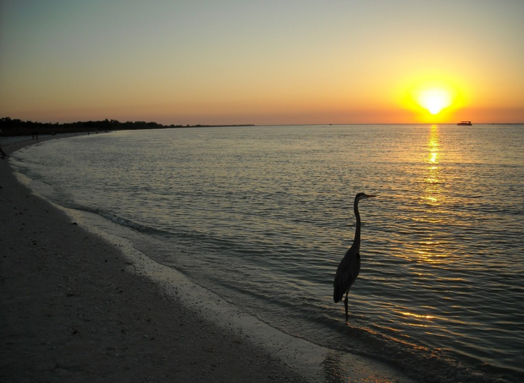Southern Florida Beaches: Lovers Key Beach with the company of a nearby egret