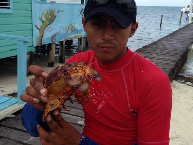 Belizean Lobster anyone 1