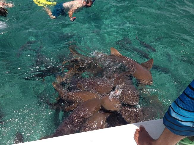 Knerf Sharks 1