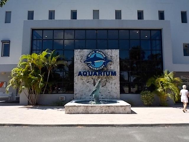 Mote aquarium discount coupons