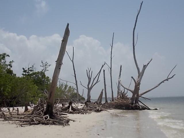 LKSPB Shoreline 2