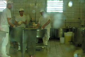 Dairy Employess