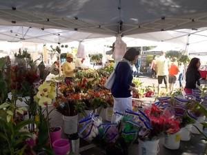 FM Interview Naples Flowers 2