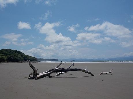 Yankee Beach Driftwood