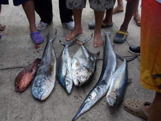 Tournament Fish 1