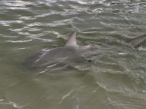 Bull Shark LKB 6.8 Ft 1