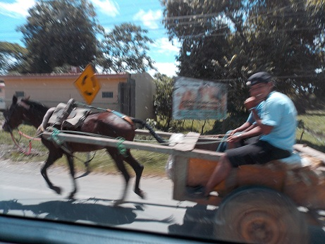 horse-drawn-carts