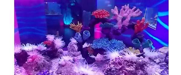 playa del carmen's l'aquarium